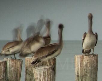 Resting Pelicans on pilings in Naples, Florida Long Exposure Photo Prints