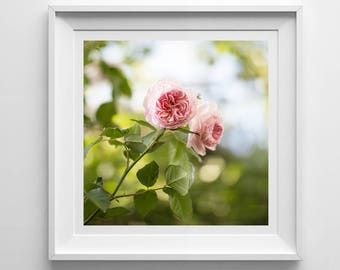 Nature Photography, Pink Roses, Original Print, Flowers, Landscape, Botanical Wall Art, Pretty Decor