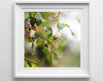 Nature Photography, Pink Rose, Original Print, Rosebud, Flowers, Landscape, Botanical Wall Art, Pretty Decor