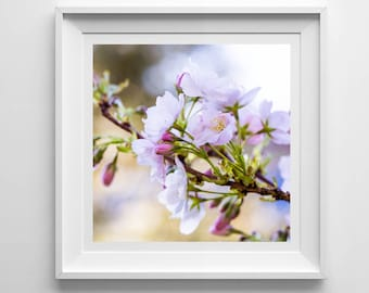 Nature Photography, Cherry Blossom, Original Print, Flowers, Landscape, Botanical Wall Art, Pretty Decor