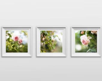 Set of 3: Pink Roses, Nature Photography, Original Print, Flowers, Landscape, Botanical Wall Art, Pretty Decor
