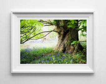 Nature Photography, Bluebell Print, Woodland, Floral, Landscape, Botanical Wall Art, Pretty Decor