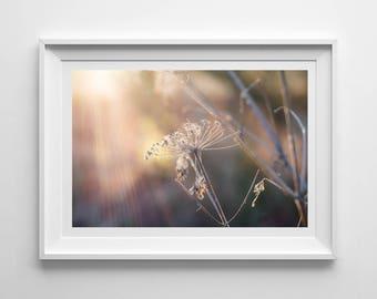 Nature Photography, Winter Seedhead, Sunshine, Original Print, Floral, Landscape, Botanical Wall Art, Pretty Decor