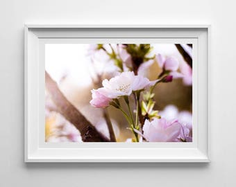 Nature Photography, Cherry Blossom, Original Print, Floral, Landscape, Botanical Wall Art, Pretty Decor