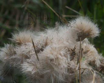 Flower Seed Pollen , Digital Download, Nature Print, Botanical Photography, Floral Print, Wall Art, Home Decor