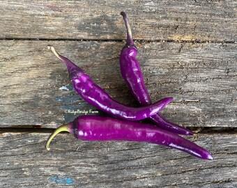 Buena Mulata Heirloom Hot Pepper Seeds / Packet of 20 Seeds / Organically Grown Premium Heirloom Pepper Seeds