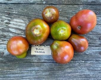 Black Trifele Heirloom Tomato Seeds / Organically Grown  / Packet of 20 Seeds  / Premium Heirloom Tomato Seeds
