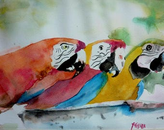 watercolor three curious macaws