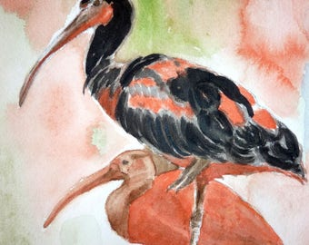 watercolor two black and white ibis