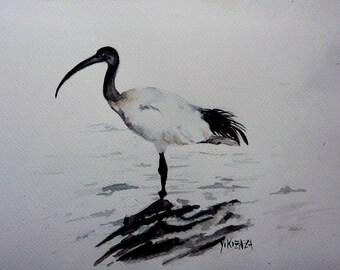 the royal Ibis watercolor
