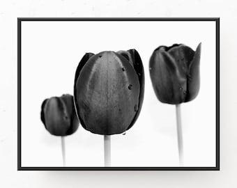 Black and White Print, 3 Black Tulips Print, Printable Art, Digital Download, Tulip Photograph, Printable Art, Poster, Black White Print