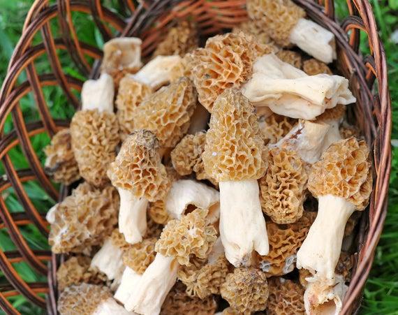 Morel Mushroom Spores In Sawdust Bag Garden Mushroom Seed Etsy