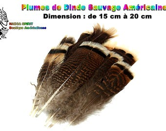4 large natural feathers from 12 to 18 cm U.S.A original Wild Turkey