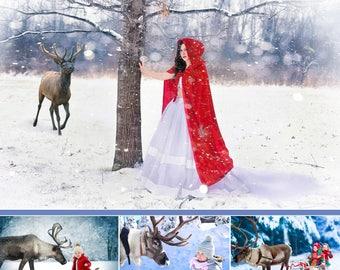 Set of 16 Real Deer , reindeer, photoshop overlays, animals collection, Santa Claus deer, photography deer,winter,Christmas,png file