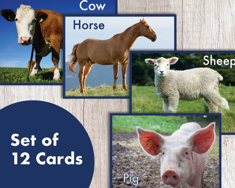 image relating to Printable Animal Flash Cards identify Printable Fair Farm Animal Flash Playing cards, Understanding Playing cards - PDF Quick Down load