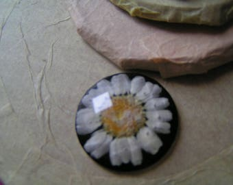 Daisy dried flower resin cabochon