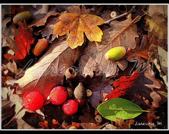 Photo 30X40cm Composition of autumn fruits and leaves