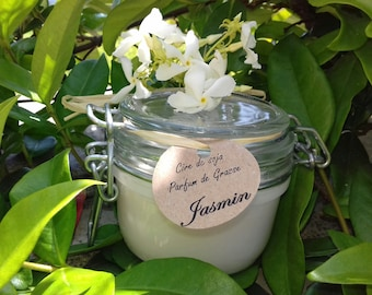 Jasmine soy wax candle plant