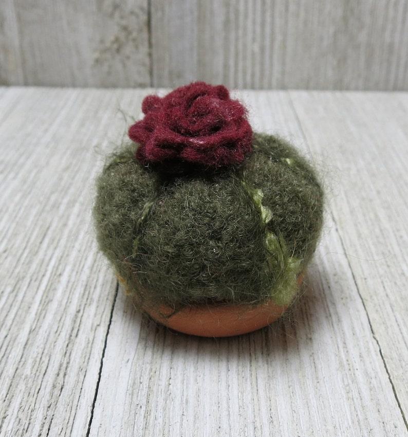 Tiny Barrel Cacti