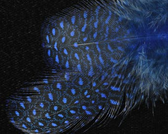 set of 20 blue speckled feathers shine with Guinea fowl making jewelry, scrapbooking
