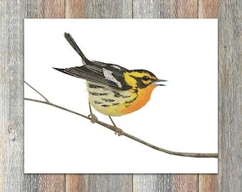 Blackburnian Warbler Bird Print