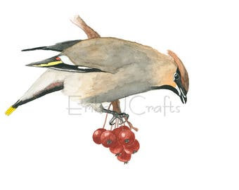 Bohemian Waxwing bird with red berries watercolor painting, watercolor print, home art, decor, nature