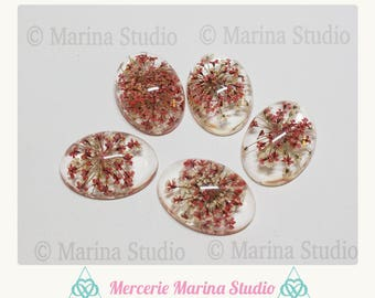 Dried flowers cabochon 25x18mm colors in Orange