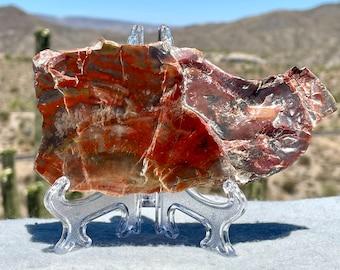 Rainbow Petrified Wood, Polished Petrified Wood Slice, Southwestern Decor, Geology Gifts for Best Friend, 278 grams (9+ oz. )