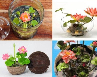 Mini Lotus Seeds 10 Pack / mini lotus plant / mini lotus flowers / mini lotus terrarium / mini lotus water lily terrarium *