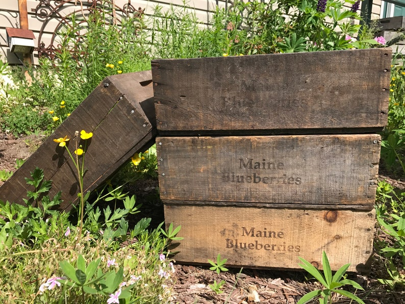 Antique Maine Blueberry Wooden Crate  Decorative rustic image 0