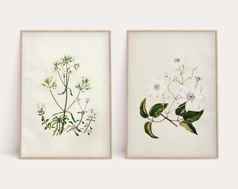 Floral / Botanical Art