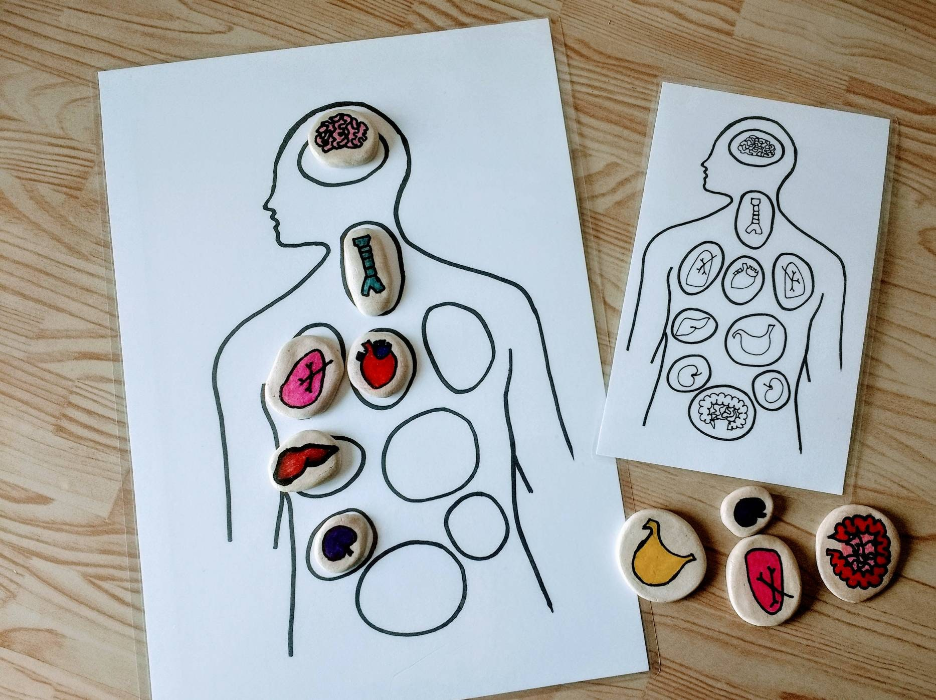 Anatomy Game Montessori Materials 10 Pieces Included Etsy
