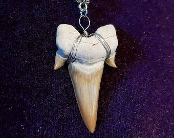 Shark Tooth Fossil Necklace