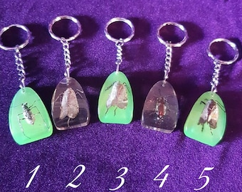 5 Different Insect Resin Keychains