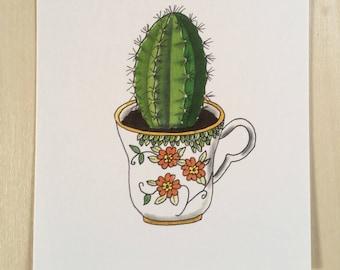 Postcard cactus in a teacup