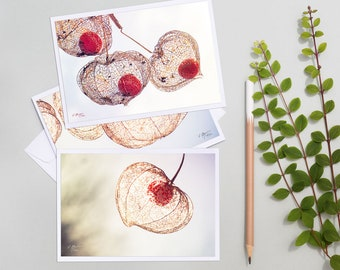 3 Photos of Physalis Botany, flower postcards, photo of physalis, pictures of love in a cage, nature greeting card,