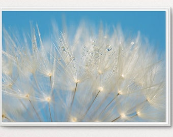 Decorative nature photo, color, with dandelion seeds and small drops of morning, dandelion picture, dandelion photo