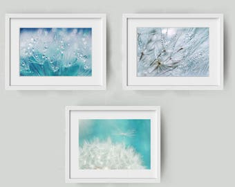 Set of three photographs of dandelion seeds that are colorful and small drops - set of dandelion macro pictures - zen decor