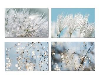 Set 4 biological cards photo nature zen, postcard flower, batch of postcards, postcard dandelion, botanical cards,