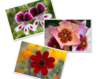 3 greeting cards red pink flowers, pretty postcards of flowers, photos garden flower, dahlia, rose, geranium, gardener gift,
