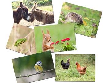 6 cartes postales amis animaux, les petits animaux, photos, herisson, ecureuil, grenouille, oiseau, cartes postales photos d'animaux,