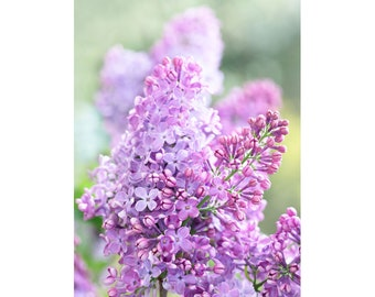 Nature photography lilac branch, flower decor, wall art room, office