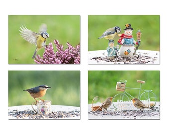 Set of 4 postcards of small birds of the garden, robin, mesange, small birds of the garden, organic postcards,