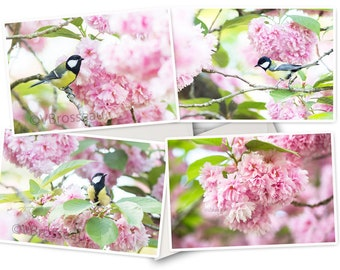 Set of 4 bird photo cards in Japanese cherry blossoms, cherry greeting cards from Japan, flower postcard,