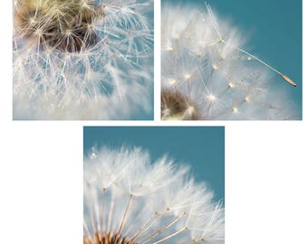 Dandelion photography decor photography wall blue dandelion - dandelion pictures set - three dandelion macro photos