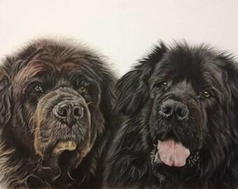 Newfoundland dog art,Custom dog drawing,Newfoundland pencil drawing,Newfoundland portrait from photo,Newfoundland photo to draw,Pet portrait