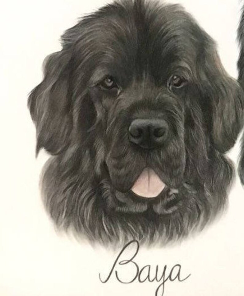 newfoundland hond kunst aangepaste hond tekenen newfoundland | etsy