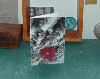 Blank Greeting Card With Photograph Cover: Pink flower leaning against a tree
