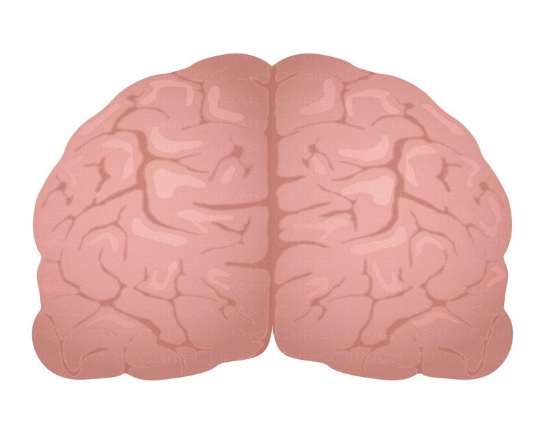 brains brain jpg brain vector BRAIN SVG brain png clipart brain
