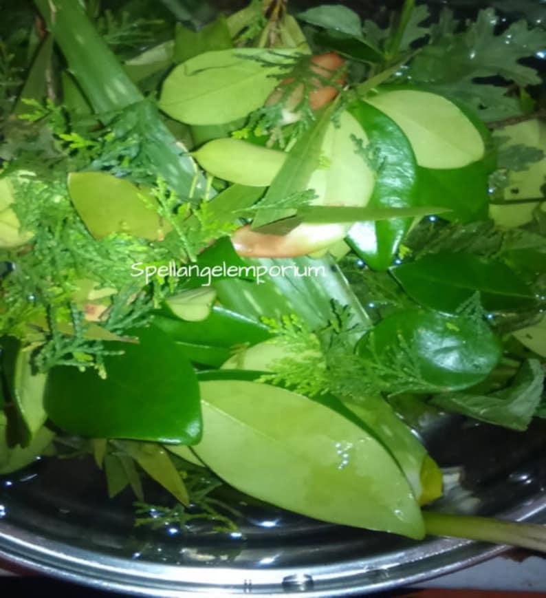 Elegua Herbs for Spiritual Bath - Hierbas de Elegua ~Orishas, Santeria, Ifa~